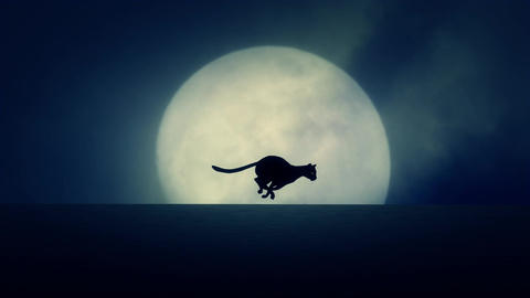 Cat Running on a Rising Full Moon Background Live Action