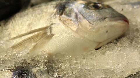 Shop Selling Fresh Fish on Ice in a Market in Jerusalem Footage