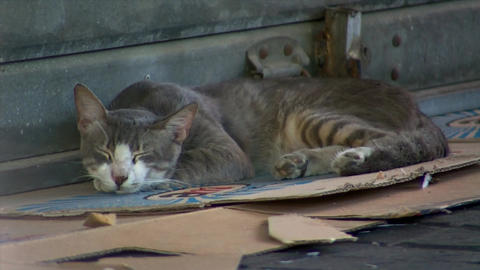 Feral Stray Cat Sleeping on a Cardboard in the Market Live Action