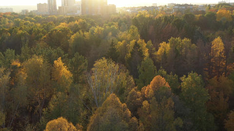 Flying over the autumn forest with colorful trees. On the horizon you can see Live Action