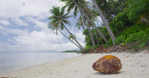 Beach Vacation Travel Holidays in French Polynesia - Paradise beach with Coconut Live Action