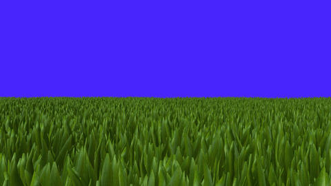 Wide Field of Green Grass Zoom In on a Blue Screen Footage