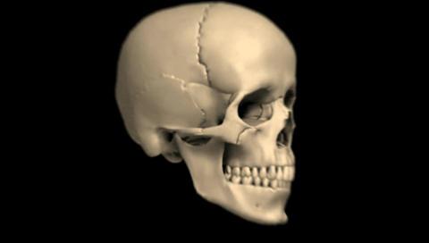 Skull Transition on a Black Background Footage