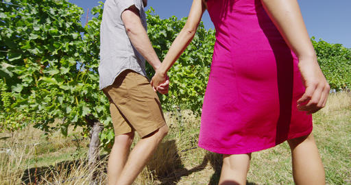 Romantic couple holding hands in vineyard walking by grapevines on wine tour Live Action