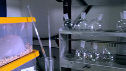 1080p Sliding From Containers With Laboratory Rats to Equipment With Chemical Footage