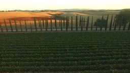Aerial: backwards camera movement away from road between Italian cypress plants, Footage