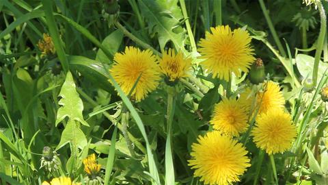 Nice Bright Flowers