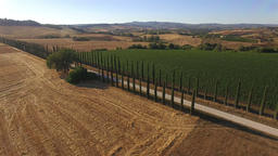 Aerial: opening shot of a long road between Italian cypress plants, next to vine Footage