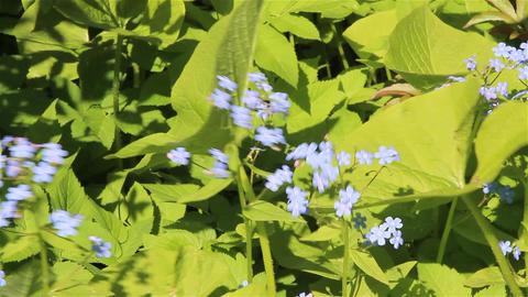 Nice Bright Flowers 0