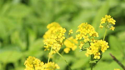 Nice Bright Flowers 2