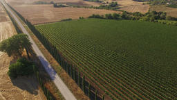 Aerial: camera pan towards vineyard over the road between beautiful Italian cypr Footage