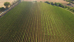 Aerial shot of vineyard rows in Tuscany, Italy Footage