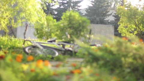 Lying bicycles in grass, daytime nature, trees pines no people Footage