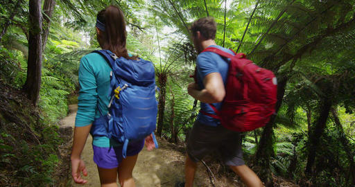 Hiking people tramping active lifestyle - New Zealand forest nature landscape Live Action