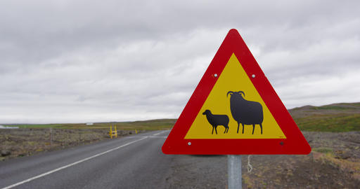 Iceland Sheep Road Sign on the Famous Ring Road Live Action