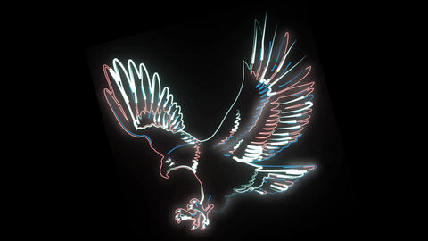 Neon animation of eagle with stretched wings. 2d animation of wild bird on black Live Action