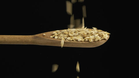 Falling grain barley fills the spoon and fall out of a wooden spoon. Slow motion Live Action