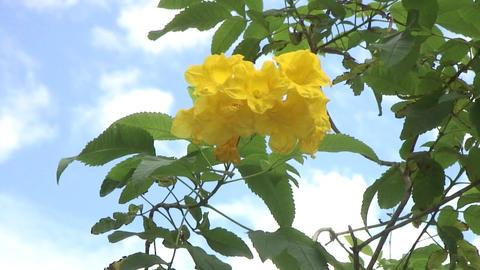 Yellow flowers,taipei,taiwan Live Action