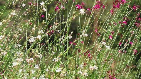 Generic garden flowers Footage