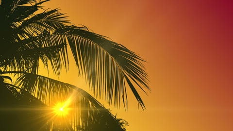 Background With Palm Tree Leaves - Sunset CG動画