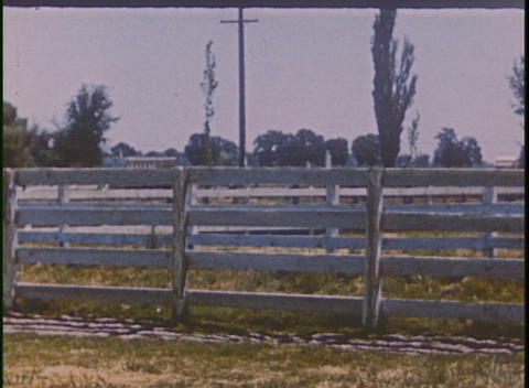 A horse runs in its pen in this home movie footage Stock Video Footage