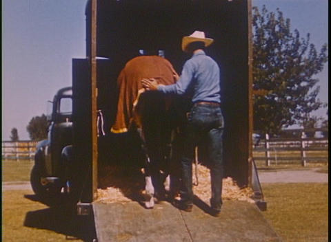 A horse is led to a trailer and driven away in this... Stock Video Footage