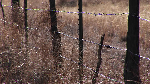 Close-up of a barbed wire fence in a grassy field Footage