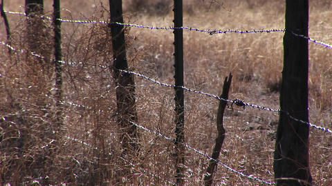 Close-up of a barbed wire fence in a grassy field Stock Video Footage