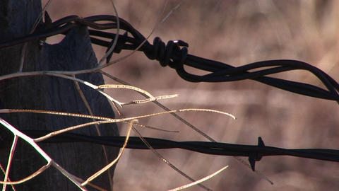 Extreme-close-up Of Barbed Wire Attached To A Post stock footage