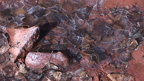 Close-up Of Beautiful Frozen Water In A Small Stream With Leaves And Rocks At The Bottom stock footage
