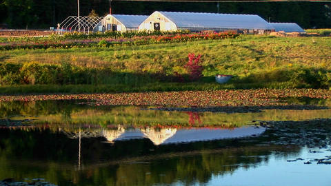 Greenhouses near a field and body of water at sunset in... Stock Video Footage