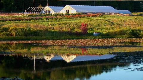 Greenhouses near a field and body of water at sunset in Vermont Footage
