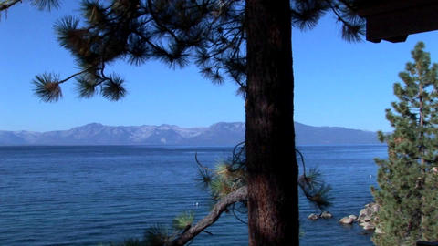 Lake Tahoe evergreen trees stand at the edge of a blue lake near the Sierra Nevada mountains Footage