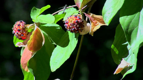 Multi-colored plant pollen and leaves move in a breeze at... Stock Video Footage