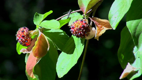 Multi-colored plant pollen and leaves move in a breeze at day Footage
