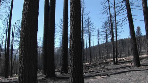 A forest-fire with felled trees Stock Video Footage