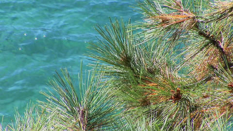 Tree branches in the Sierra Nevada mountains of Lake... Stock Video Footage