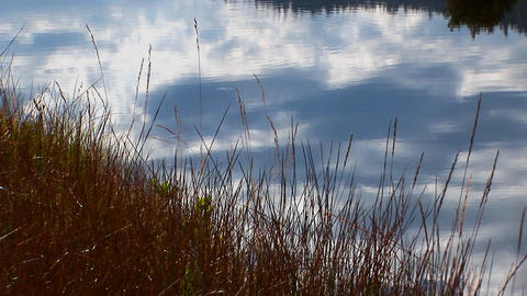 Lake water reflects a blue sky with dry grass near the Sierra Nevada Mountains Footage