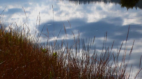 Lake water reflects a blue sky with dry grass near the... Stock Video Footage