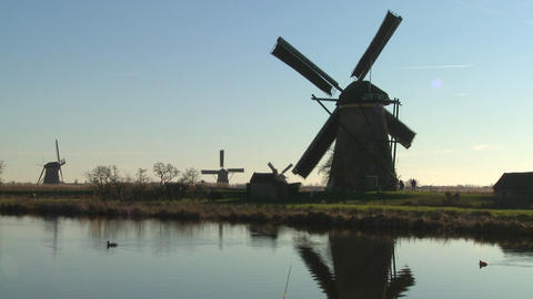 Windmills line a canal in Holland as ducks float by Footage
