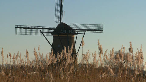 A windmill rises behind tall grass in Holland Stock Video Footage