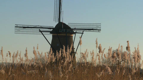 A windmill rises behind tall grass in Holland Footage