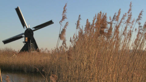 A windmill spins near high grasses in Holland Footage