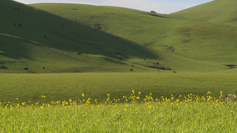 Green grass grows on rolling hills Stock Video Footage