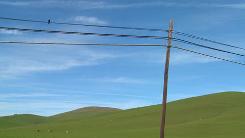 A beautiful and stark shot of a bird sitting on a telephone line in front of a green rolling landsca Footage