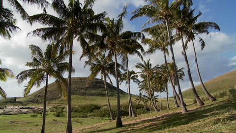 Beautiful palm trees blow in the wind on a South Sea Island Stock Video Footage