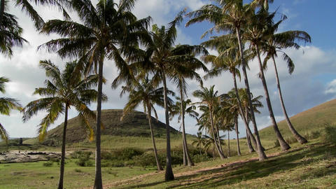 Beautiful palm trees blow in the wind on a South Sea Island Footage