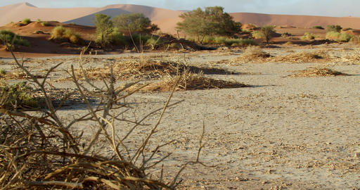 Panoramic view on the dry terrain of Namib desert with dry grass and trees, 4k Live Action