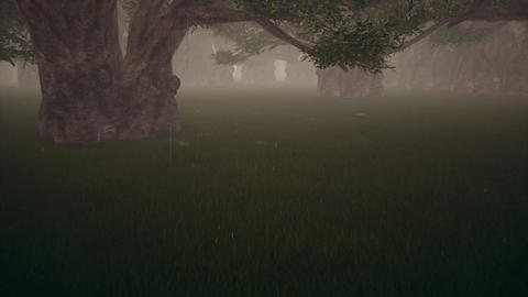 Rain in the dark dark forest Jungle nature. Countryside scenery Live Action