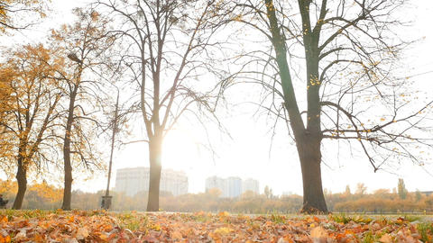 Beautiful autumn landscape. Yellow leaves with sunbeams of light. Slow motion Live Action